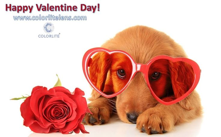 Happy Valentine Day! www.colorlitelens.com Did you know?  Dogs are not completely color blind since they have a dichromatic color perception. Unlike humans who have three different color sensitive cone cells in their retina (red, green and blue) dogs have only two (yellow and blue). The color vision of dogs is similar to a person suffering from deuteranopia. http://fr.colorlitelens.com/, http://nl.colorlitelens.com/, http://se.colorlitelens.com/, http://de.colorlitelens.com/