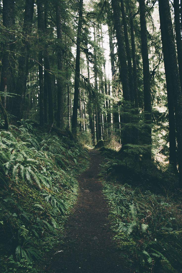 Forest Lore — hannahkemp:  Trails//Oregon February 2017    ...