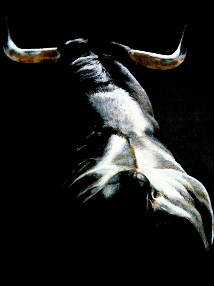 Los toros vivos!