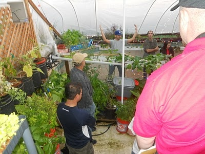 94 best aquaponics images on pinterest aquaponics for Convert pool into garden