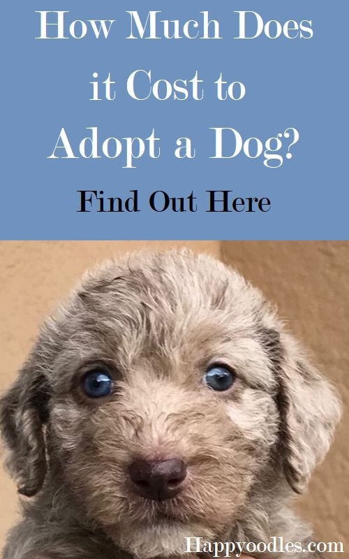 How Much Does It Cost To Adopt A Dog Happy Oodles Dog Adoption Potty Training Puppy Puppy Adoption