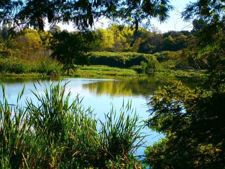 Humedal de Córdoba... Tesoro de aves y biodiversidad