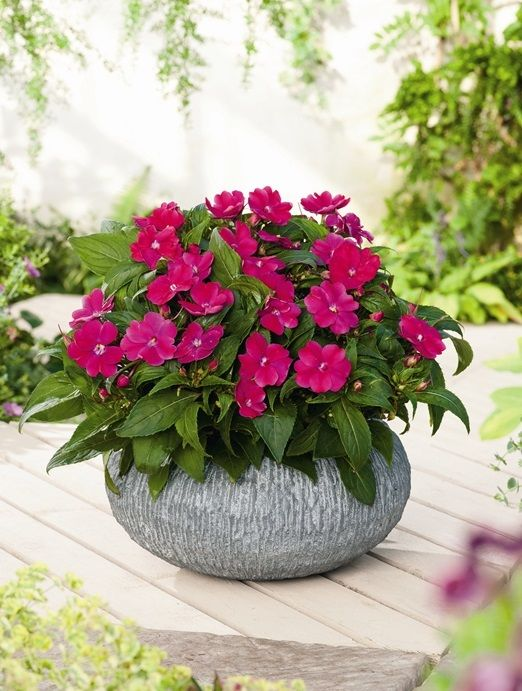 Assorted Impatiens #rainorshine #floral #brightflowers