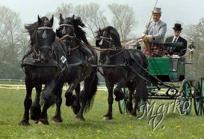 Fríský den 2006 | Fríský kůň