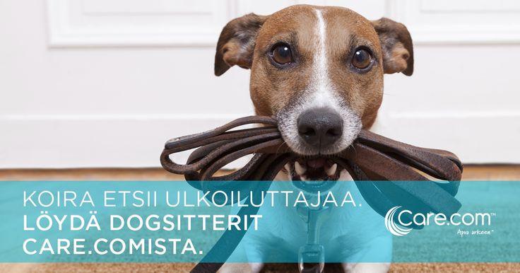 #Koira #Koirat #dogsitter