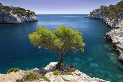 Brian Jannsen - Lone Pine Tree Growing Out of Solid Rock, Calanques Near Cassis, Provence, France - Fotografik Baskı - AllPosters.com.tr'de.