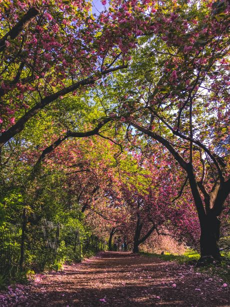If you ever get the chance to visit Central Park during Spring, do it.