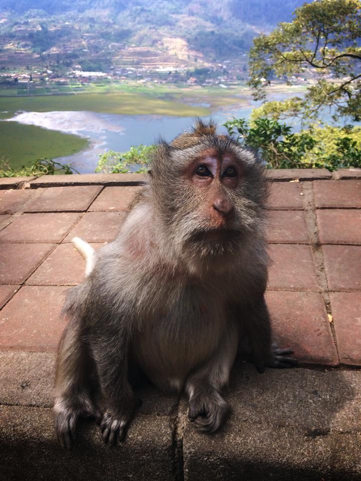 Monkey Island - Bali , This monkey looks like clay from SOA haha