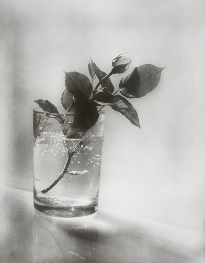 Photo by Josef SUDEK - Rose