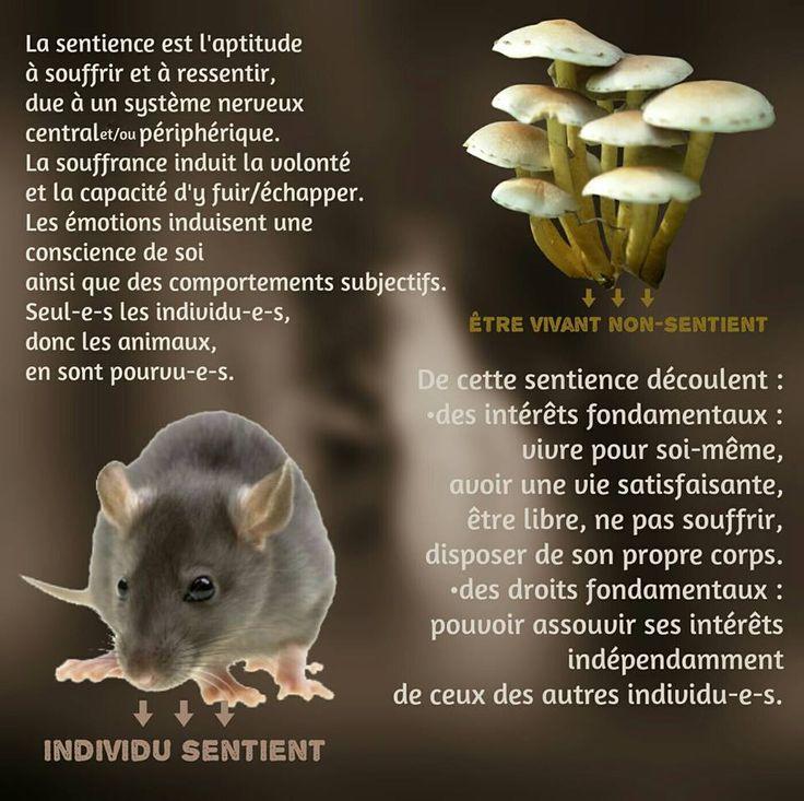 La sentience et la sensibilité. Les véganes reconnaissent également la sensibilité des plantes et organismes et font de leur mieux pour respecter la nature dans son intégralité.