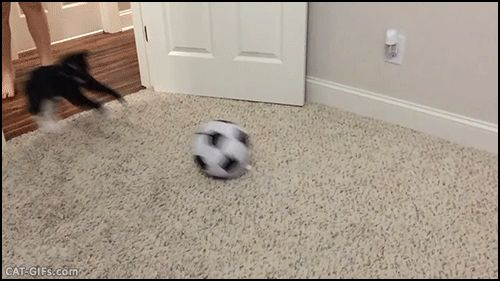 "Animated KITTEN GIF • Woah! Lionel Messi Kitty playing soccer he is fast and purrious. ""This Kitten is a winner for the National Cat soccer."""