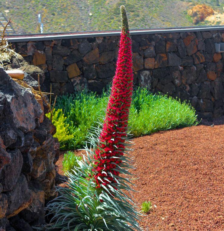 Tenerife – 365 days Summer Island
