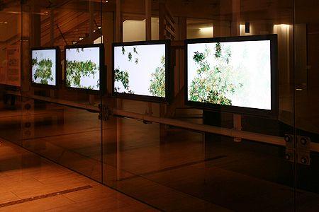 《ヴィッセンゲヴェックス(知識の繁茂)》2007年 クリスタ・ソムラー&ロラン・ミニョノー この作品は,ドイツのブラウンシュヴァイク市中心部にある広場に約1年間仮設された,ガラス張りの建物の外壁面に設置されました.建物には,カフェ,棚にある本を自分の本と交換できる図書室という2つの機能があり,この作品は,通行者の注意を惹き,建物の中へと誘導する目的で,同市の委嘱により制作されました.ここで作者は,会話や本の交換など,建物の中で行なわれる直接/間接を問わないさまざまなコミュニケーションによって人々が知識をやりとりする様子を,仮想植物が生い茂るさまになぞらえています.ものごとのとらえかたは,人によって異なります.また,時を経ることによって,同じものごとがまったく違って感じられることもあるでしょう.同じように,どのような植物がどのように生長するかは,鑑賞者が作品へどのように関与するかにゆだねられているのです.