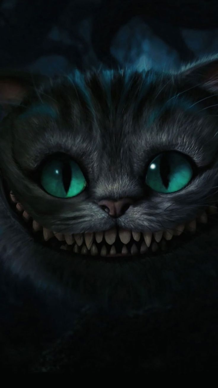 Cat iPhone Wallpaper 5