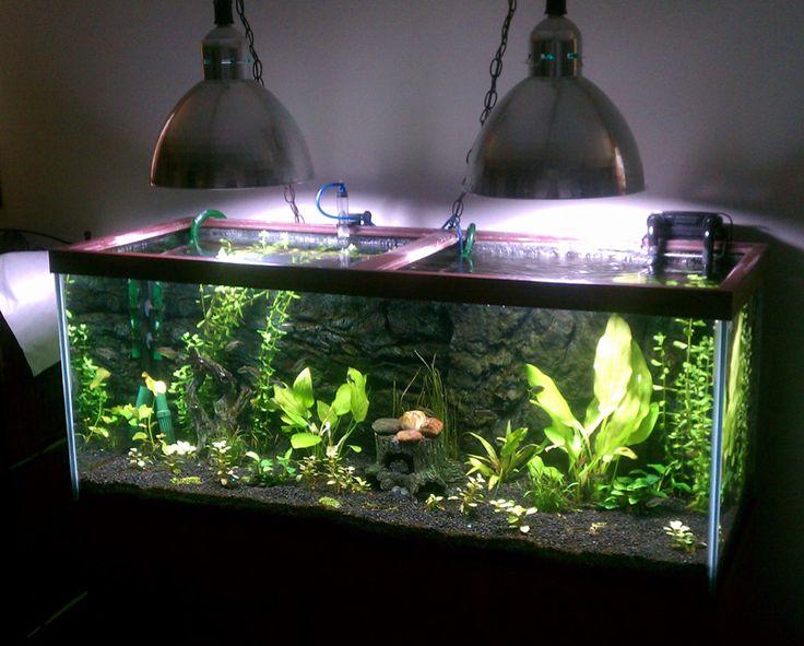 172 best images about fish tank on pinterest freshwater for Aquarium 120l