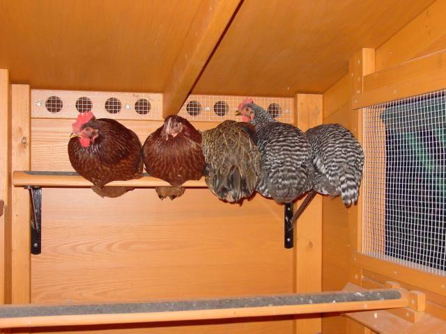 chicken coop ventilation holes 2
