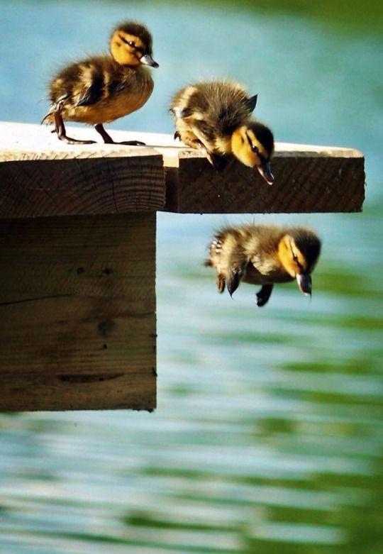 Juhu juhu ..., endlich dürfen wir im Wasser planschen! :o))