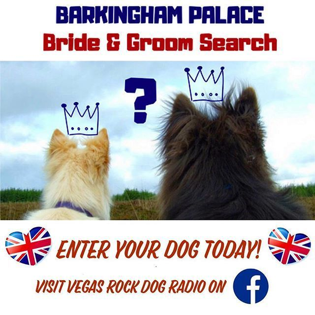 Im Searching For A Royal Bride And Groom For My Barkingham Palace