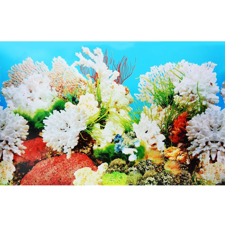 ==> [Free Shipping] Buy Best 15050CM Aquarium Fish Tank Beautiful Sticker 2017 New Decoration High Definition Background Paper Fish Tank Sticker Online with LOWEST Price | 32816684465