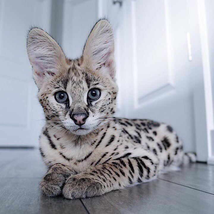 Fotografietiere Susseste Haustiere Katzen Hubsche Katzen