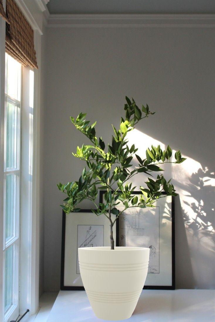 43 best Artificial Plants images on Pinterest   Artificial ...