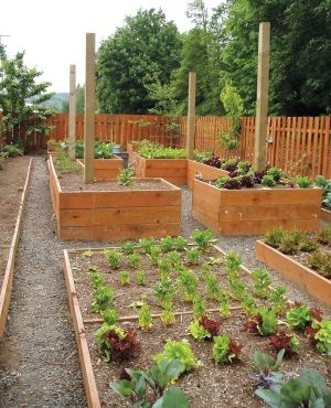 Raised beds for a culinary garden