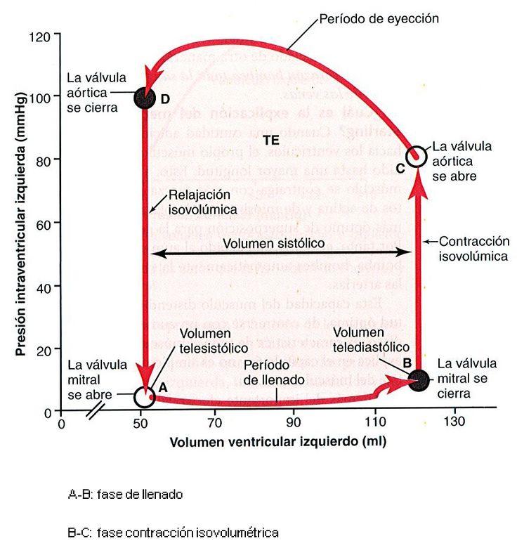 1.2.-Fisiologia del musculo cardiaco   Volviendo a lo básico