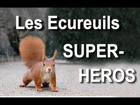 ▶ Les écureuils super-heros - YouTube