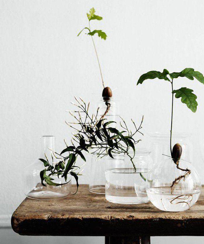 1000 id es propos de plantes aquatiques sur pinterest herbes d 39 int rieur repousser les. Black Bedroom Furniture Sets. Home Design Ideas