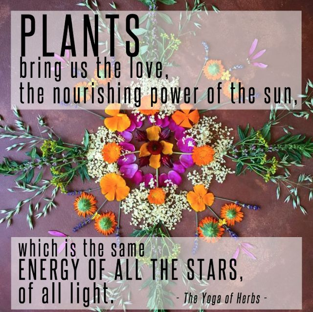 Plant Medicine // Quote from The Yoga of Herbs |