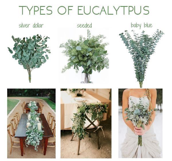 Our bridal blogger Shea DeForest is sharing her love for all things eucalyptus, the most popular types and how she is styling her wedding with these leaves!