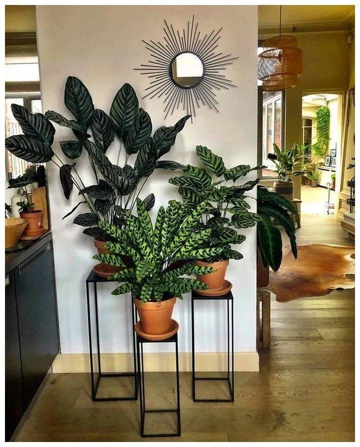 50+ small entryway decor ideas 51 | Plant decor indoor ...