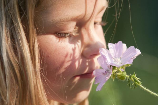 Zelf een lekker parfum maken | Natuurmonumenten