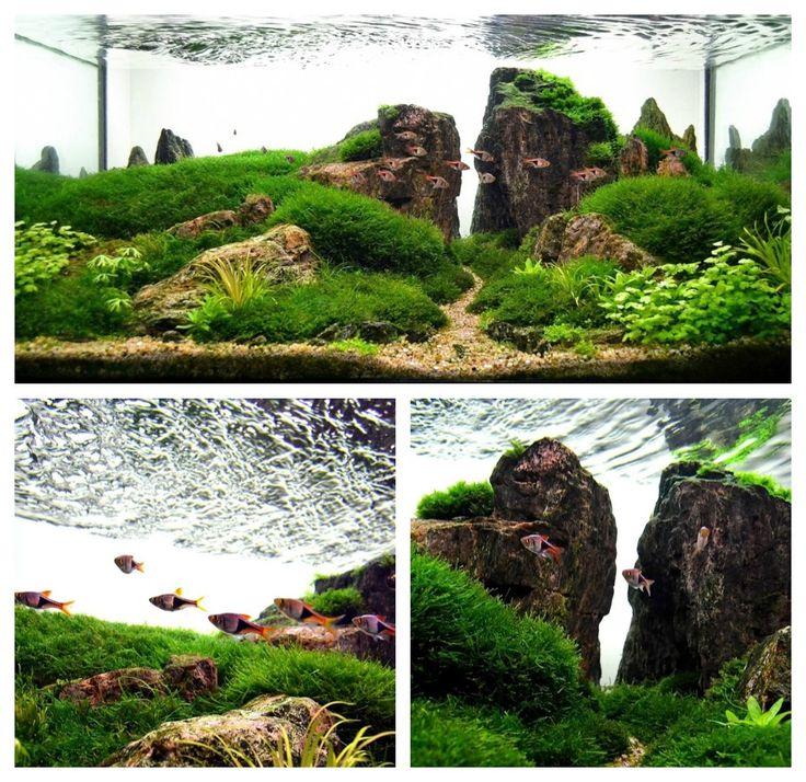 """Valley of the Storm"" features moss varieties as well as trigonostigma heteromorpha ~ Rasbora Fish."