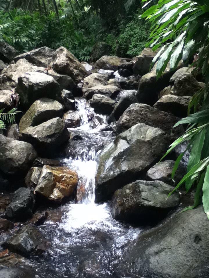 El Yunque - Puerto Rico