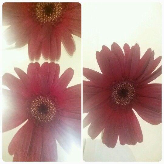 Lonely, lost flower at work #lostflower #catherinemccarthy #katzemccarthy #workstories #auckland