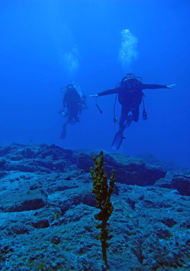 Alacağınız bir üst seviye uzmanlık kursları ile dalış hayatınızda ilerleyebilir daha da derindeki batıkları keşfedebilir ya da resiflere dalış yapabilirsiniz.   #Dalış #Sualtı #ŞişliSualtı #Scuba #DiveatTurkey