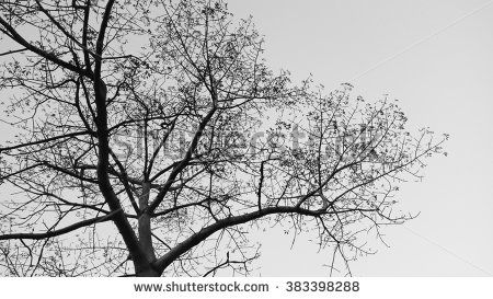 Tree Silhouettes Stock Photos, Images, & Pictures | Shutterstock