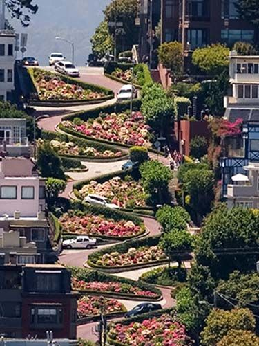 Lombard St. In San Francisco is America's crookedest street with eight hairpin turns.  It is a little scary driving down a road so steep but it is beautifully landscaped with flowers.