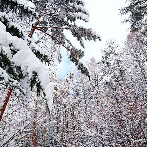 【amethystcat.28】さんのInstagramをピンしています。 《【Morning landscape】 いつもより30分早く家を出た。  予想以上に道は除雪されていた為計算が狂い、ただ早く着いてしまった!  ついに雪積もりましたね!! #山梨県#北杜市#小淵沢町 #山#森#木々 #雪#積雪 #銀世界#雪化粧 #いつもより早い出勤 #車の運転#雪道 #スタッドレスタイヤ #帰る頃に溶けきらないかな(笑) #安全第一! #命が大切! #夜道凍る#恐怖 #スタッドレスタイヤもおてあげ(泣)》