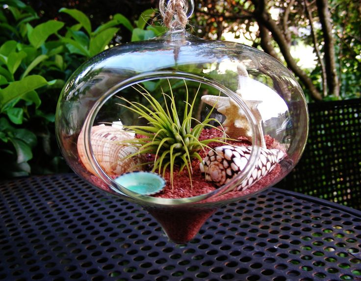 South Western Terrarium Kit ~ Heart Shaped Teadrop Glass Globe Hanging Terrarium Kit with Tillandsia Air Plant ~ Father's Day Gift ~ Gift by BeachCottageBoutique on Etsy
