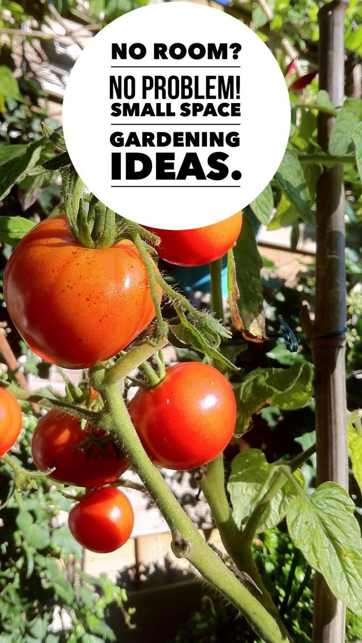 Best 25+ Small vegetable gardens ideas on Pinterest