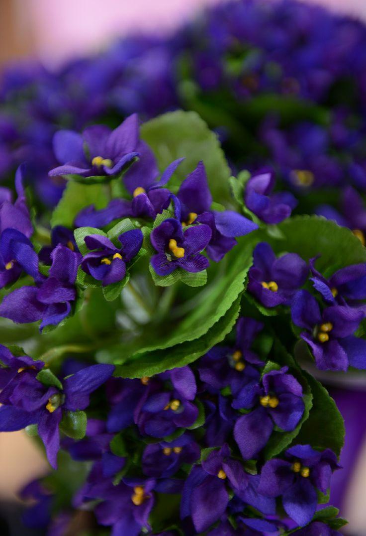 La violette est la fleur emblématique de Toulouse. / The real Toulouse violet © K. Lhémon #visiteztoulouse #toulouse #violet