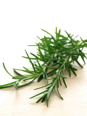 Aromatic rosemary