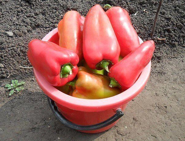 Чтобы перцы были крепкими, а урожай богатым!