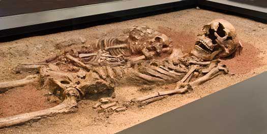 Gravlagt kvinde og barn.  I slutningen af 1980'erne blev bopladsen Gøngehusvej 7 i Vedbæk undersøgt. Her fandt arkæologerne gruber og grave med rester af både spædbørn og voksne – brændte såvel som ubrændte. De var begravet i tiden omkring 5000 f.v.t.. Der blev også fundet en hundebegravelse og en velbevaret dobbeltgrav. I dobbeltgraven lå en kvinde på ca. 40 år sammen med et 3-årigt barn. I graven var der spredt rød okker ved skeletterne, og de døde havde bl.a. fået amuletperlerne fra…