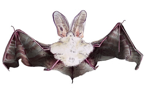 CHARLOTTE LINTON - Ermantrude's Travels, Bat