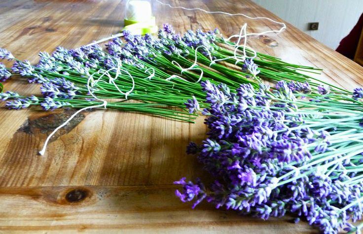how to dry lavender / comment faire sécher de la lavande