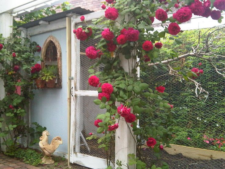 Best Coop Features Images On Pinterest Backyard Chicken - Chicken co op with flowers