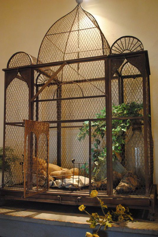 I actually want a bird cage this big,  and a few birds to put in it.